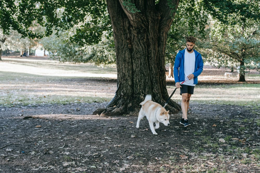 A man walking with his dog in the park. | Photo: Pexels