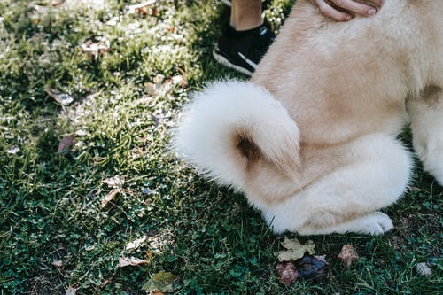 Crop owner caressing fluffy dog on lawn