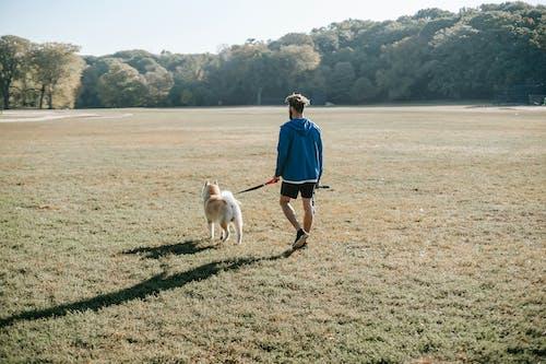 Fotos de stock gratuitas de al aire libre, animal, anónimo