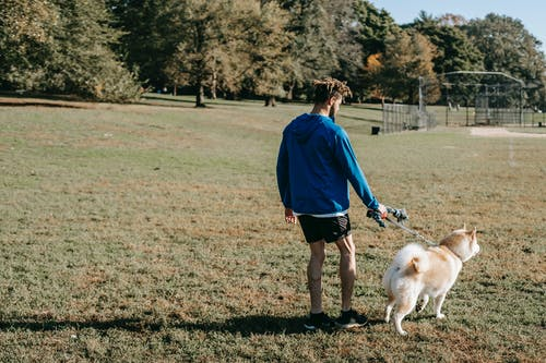 Unrecognizable ethnic owner with purebred dog on meadow in park