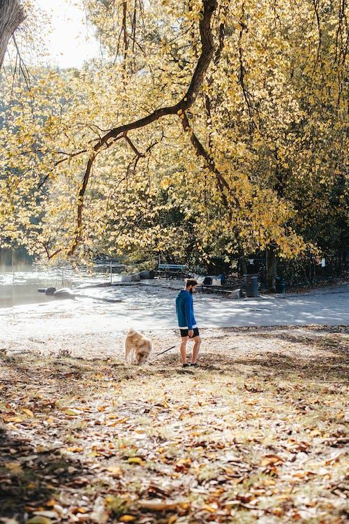 Unrecognizable man walking dog in summer park