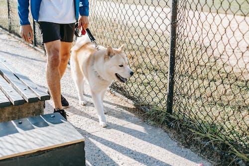 Crop man walking purebred dog on urban walkway