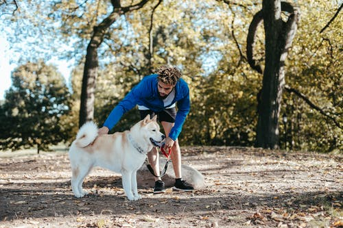 Ethnic owner caressing West Siberian Laika in park