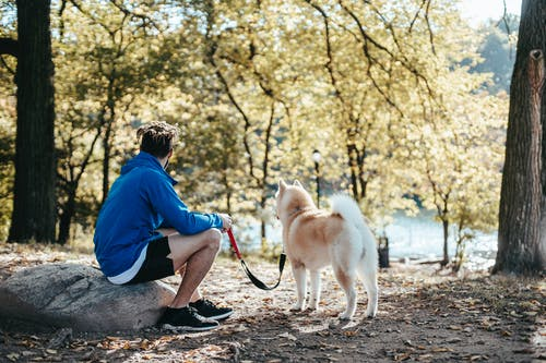 Unrecognizable hipster man with purebred dog in park