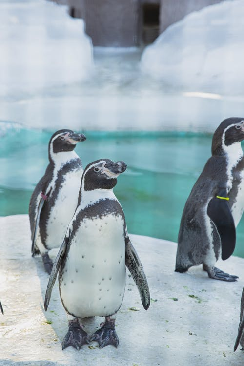 Colony of adorable penguins standing on iced ground in natural habitat or zoo