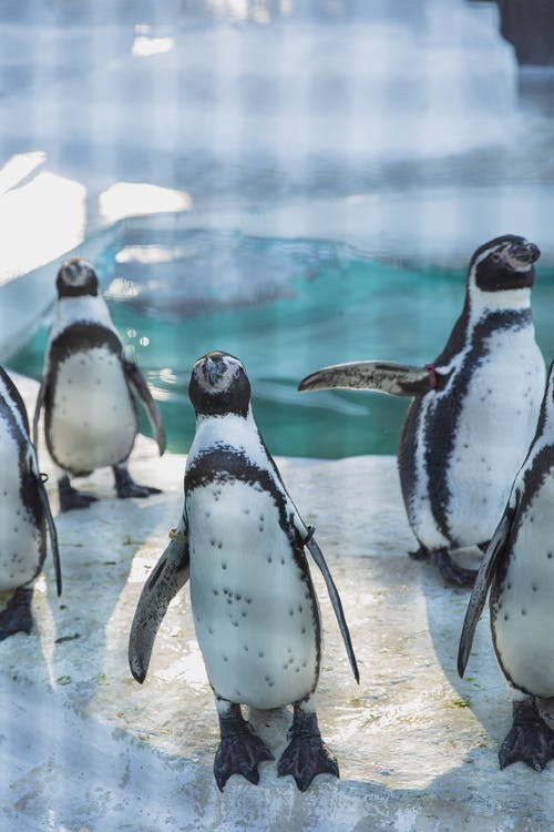 Funny small penguins on icy ground near water