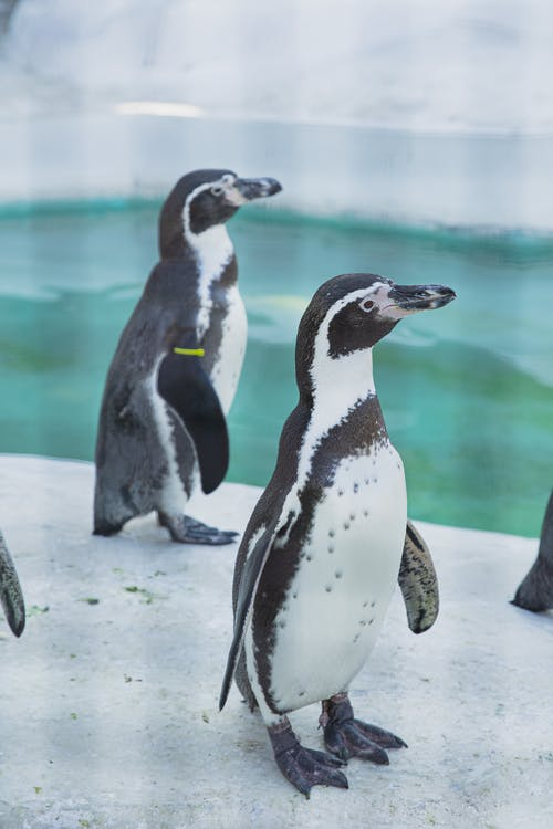 Colony of small cute penguins standing together on icy shore near cold water in zoo or natural habitat