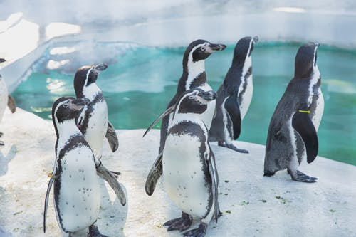 Colony of cute penguins gathering near water