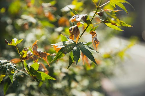 Bright bush with thin stalks and pointed wavy leaves growing in autumn garden in sunlight