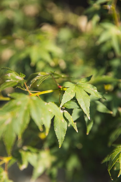 Closeup of green leaves growing on lush bush in soft focus in bright daylight on warm sunny summer day