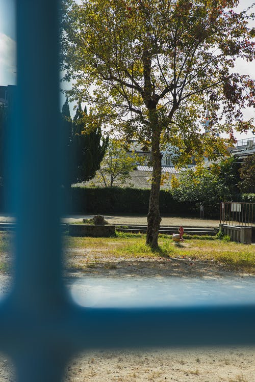 View through metal fence on empty yard with green grass and tree in sunny day