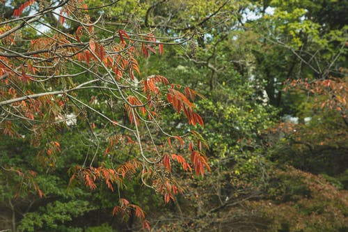 Autumn leaves on dry branches of tree