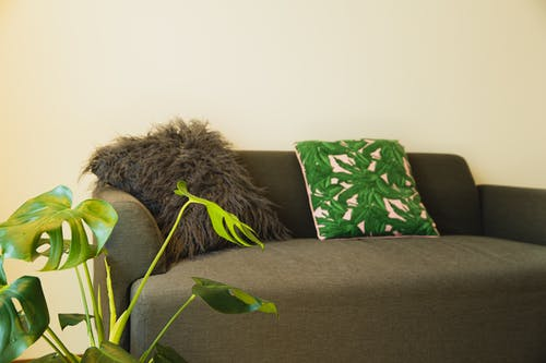 Cozy sofa with cushions and potted plant