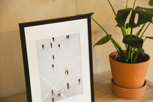 Framed picture placed on shelf near plant