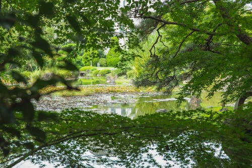 Scenic view of bright trees and shrubs growing near water in botanical garden on summer day