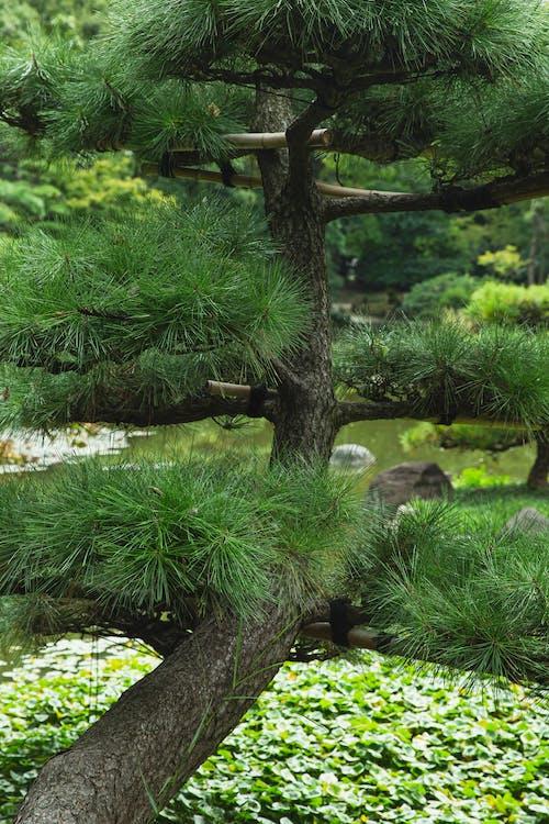 Green tree growing near pond in botanical garden