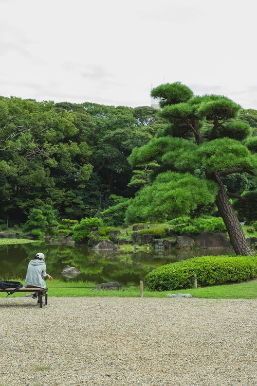 Back view of unrecognizable traveler resting on bench while admiring lush green trees reflecting in water in botanical garden