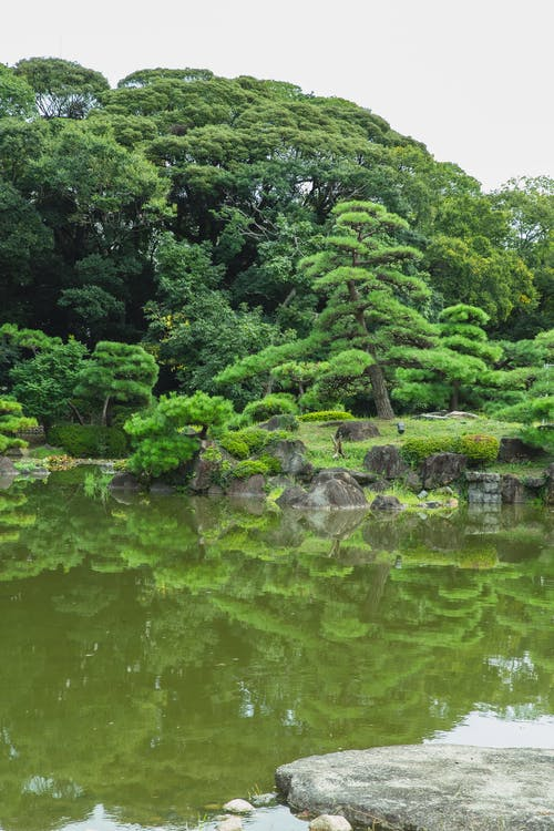 Scenic view of lush green trees reflecting in pure water with stone under white sky in summer park