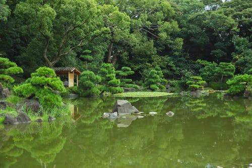 Colorful lush trees reflecting in pond of park