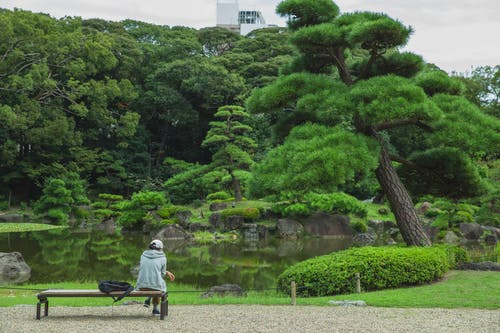 Back view of unrecognizable tourist on bench enjoying assorted green trees reflecting in pure water in botanical garden