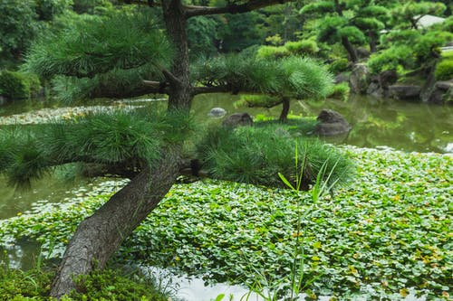 Green tree near pond with water lilies in botanical garden
