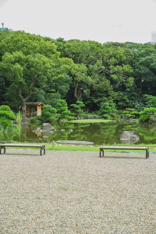 Empty benches on walkway against lush green trees and small house reflecting in water in botanical garden