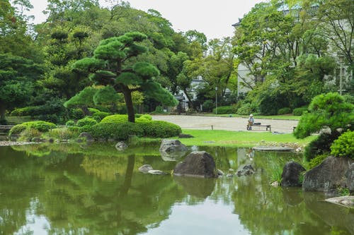 Unrecognizable tourist contemplating green trees reflecting in pond of park