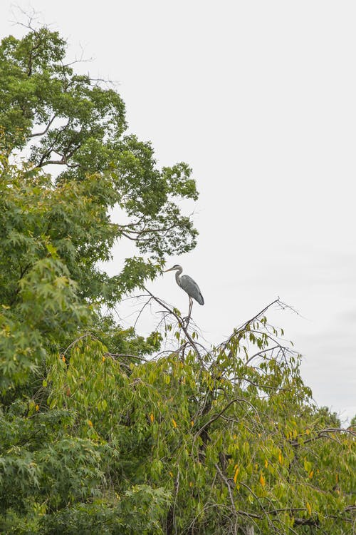 Ardea on tree twig in summer park