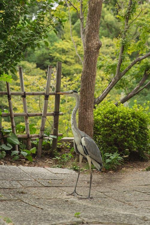 Ardea on walkway in botanical garden on summer day