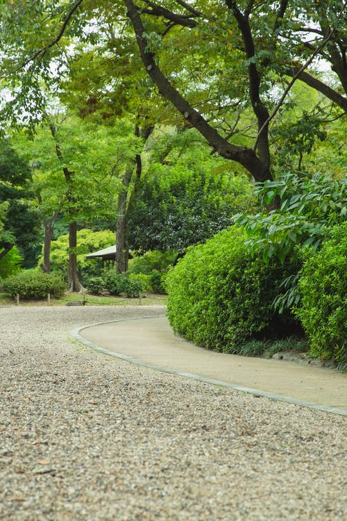 Empty pathway between bright trees and bushes growing in botanical garden on summer day