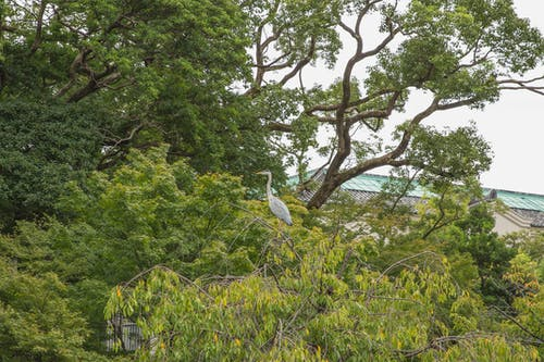 Graceful heron perching on tree branch