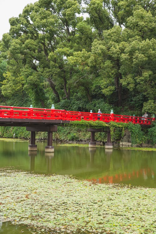 People walking on bridge under calm green pond surrounded by trees with green foliage in Osaka