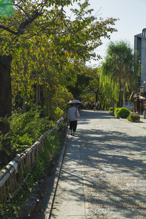 Back view of faceless lady in casual clothes with umbrella walking on narrow paved path near green trees in city park