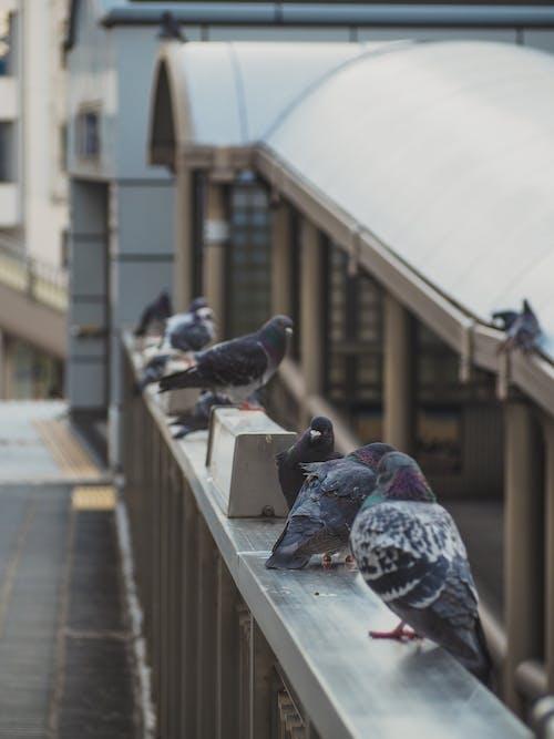 Cute pigeons sitting on railing of bridge in city