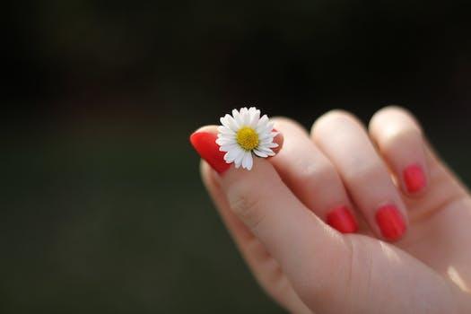 بستان ورد المصــــــــراوية Hand-daisy-flower-finger-57465