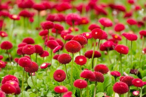 Безкоштовне стокове фото на тему «квіти, флора, цвітіння»