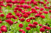 flowers, bloom, blossom