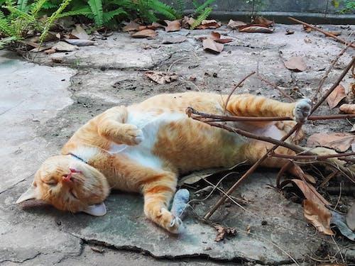 Free stock photo of cat, sleep