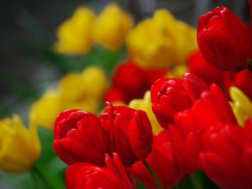 Gratis arkivbilde med blomst, blomsterbukett, blomsterknopp