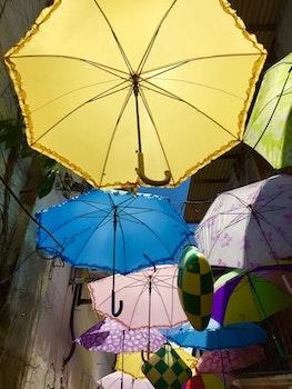 Free stock photo of umbrella, autumn colours