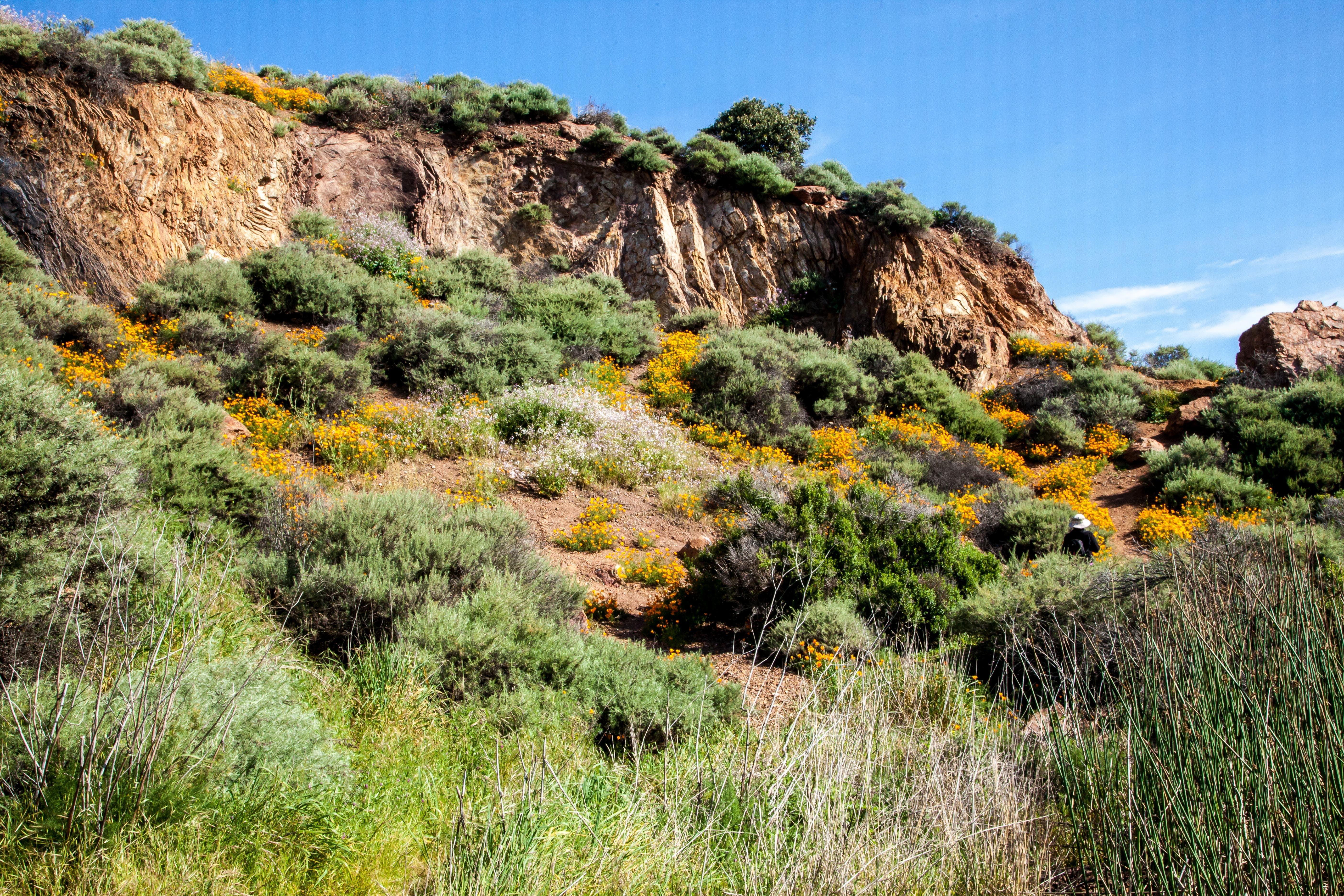 bush, cliff, daylight
