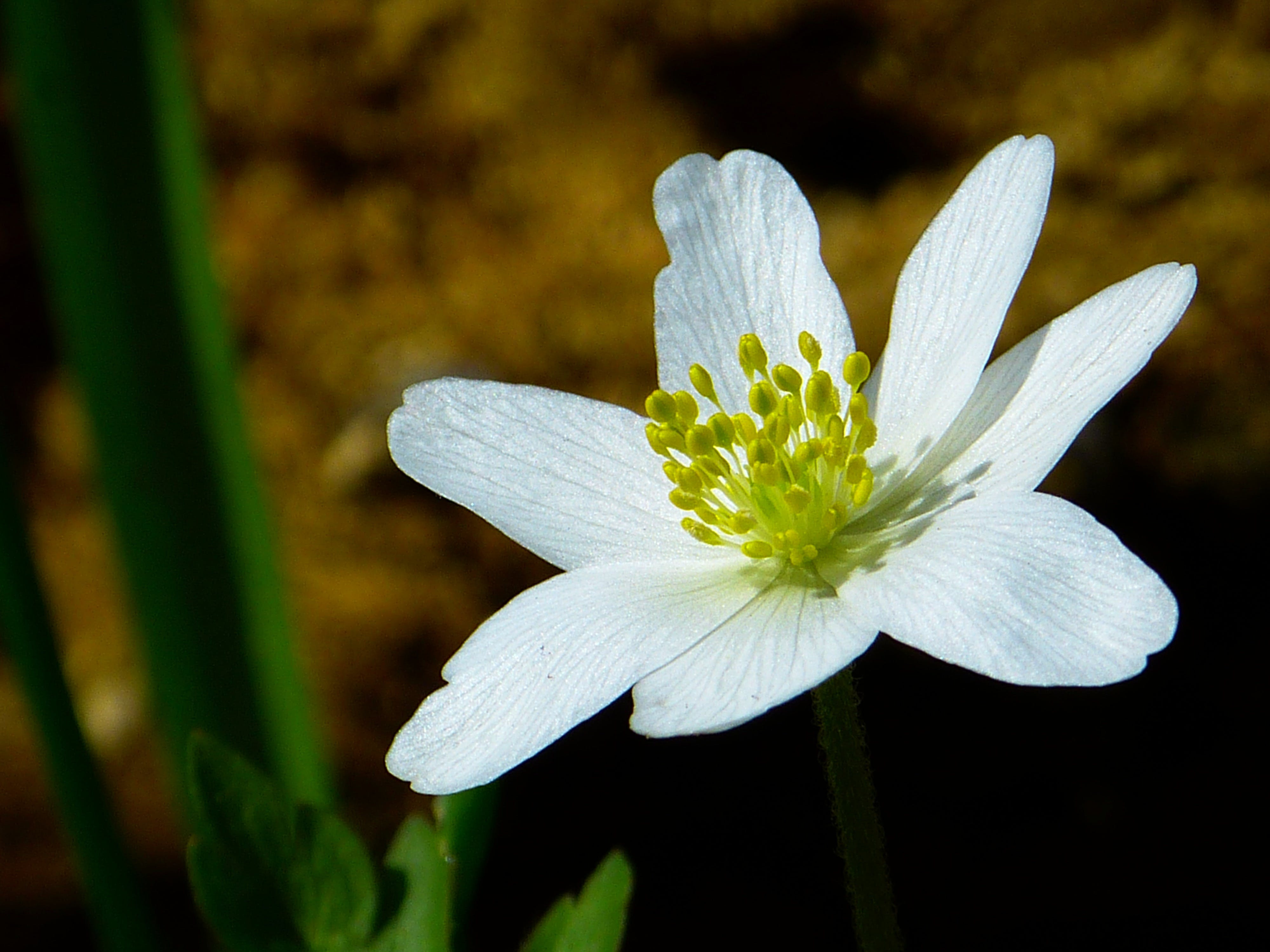 White and Green Flower in Macro Shot Photography