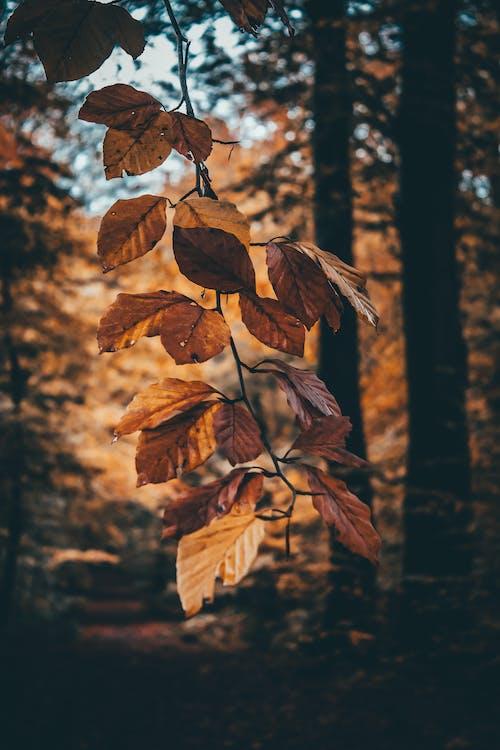 Бесплатное стоковое фото с ветвь, дерево, зима, клен