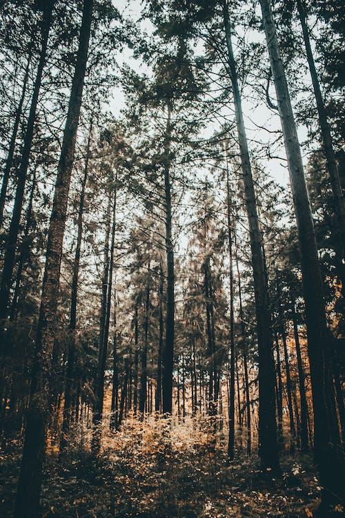 Бесплатное стоковое фото с высокий, дерево, за городом, лист