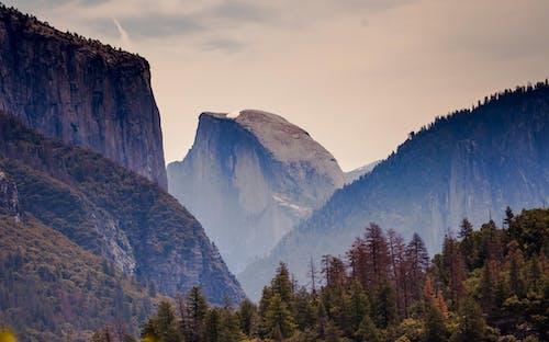 Fotos de stock gratuitas de al aire libre, amanecer, arboles, con niebla