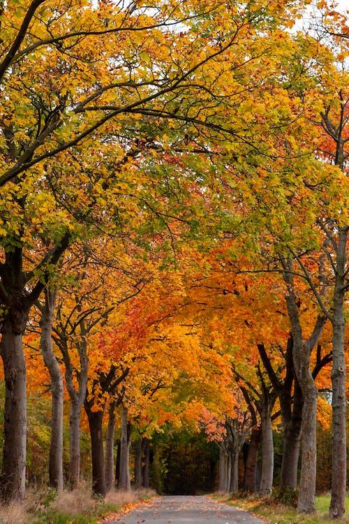 Free stock photo of autumn, road, trees