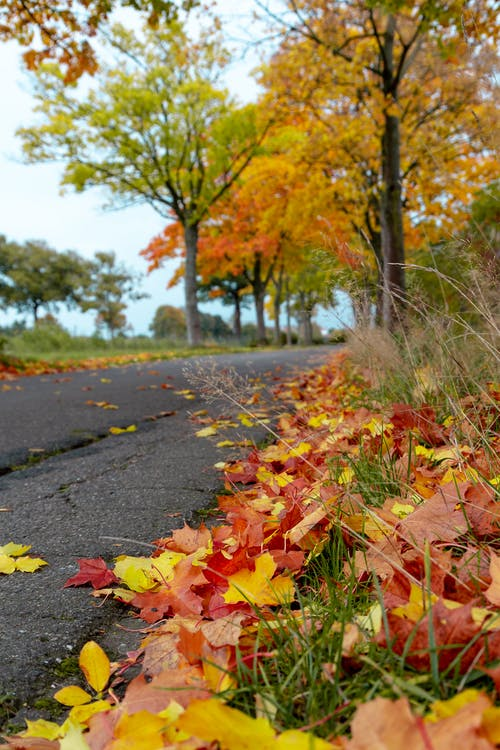 Free stock photo of autum, leafs, road