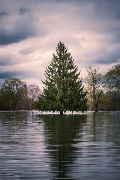 Spruce tree reflecting in lake under cloudy sky in evening