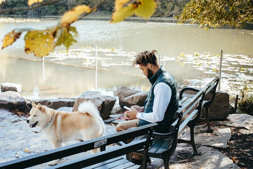 Ethnic hipster man chatting on smartphone near purebred dog outdoors