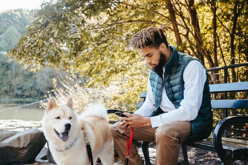 Focused black man browsing smartphone near dog in nature